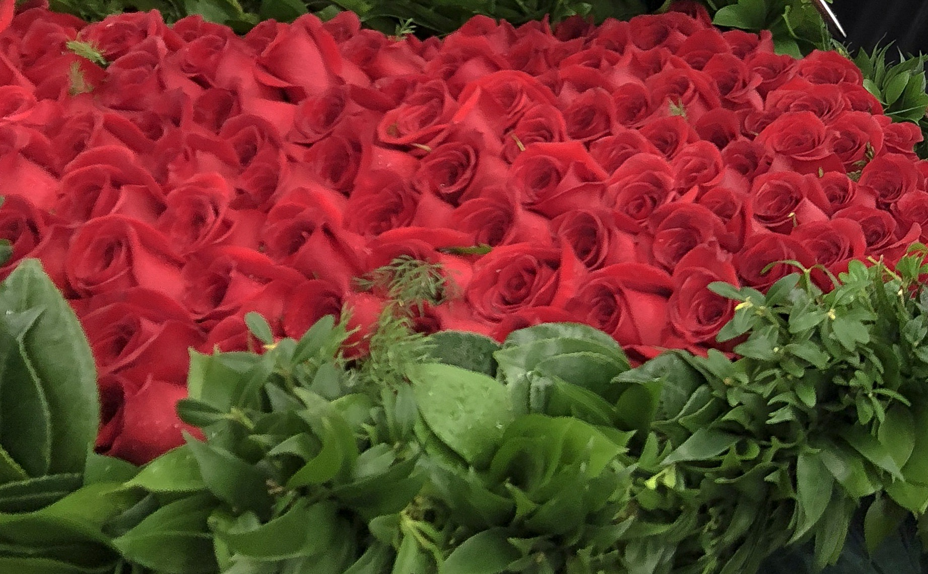 Garland of Roses: A Kroger Event